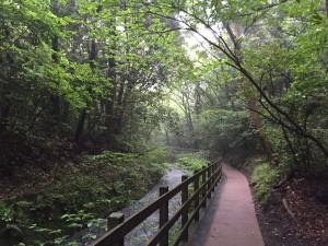 Jougasaki Hiking Course1