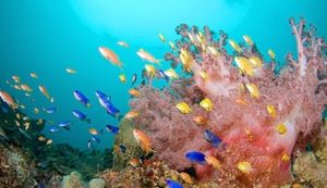 Neon Damselfish and Lyretail Coralfish